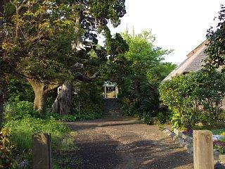 旧役所跡。左手には樹齢450年のビャクシンの巨木