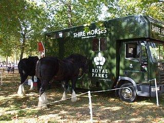 セント・ジェームズ・パークにいた馬
