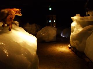 流氷館の流氷体験室