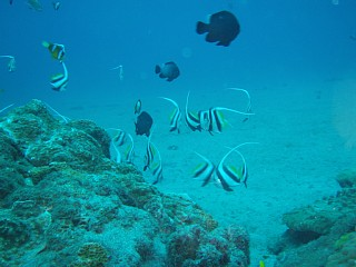 屋久島の海。多くの魚が息づいている