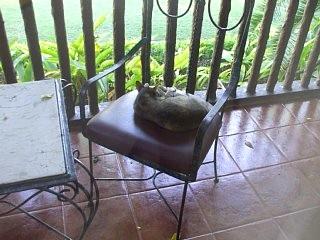ホテルのテラスに出ようとすると猫が椅子を占領中