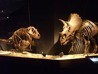 恐竜博2011