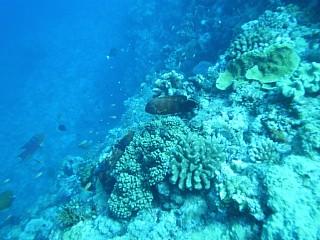 沖縄、慶良間諸島近海