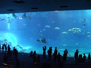 黒潮の海大水槽